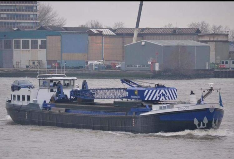 IJsvogel - Groningen-1